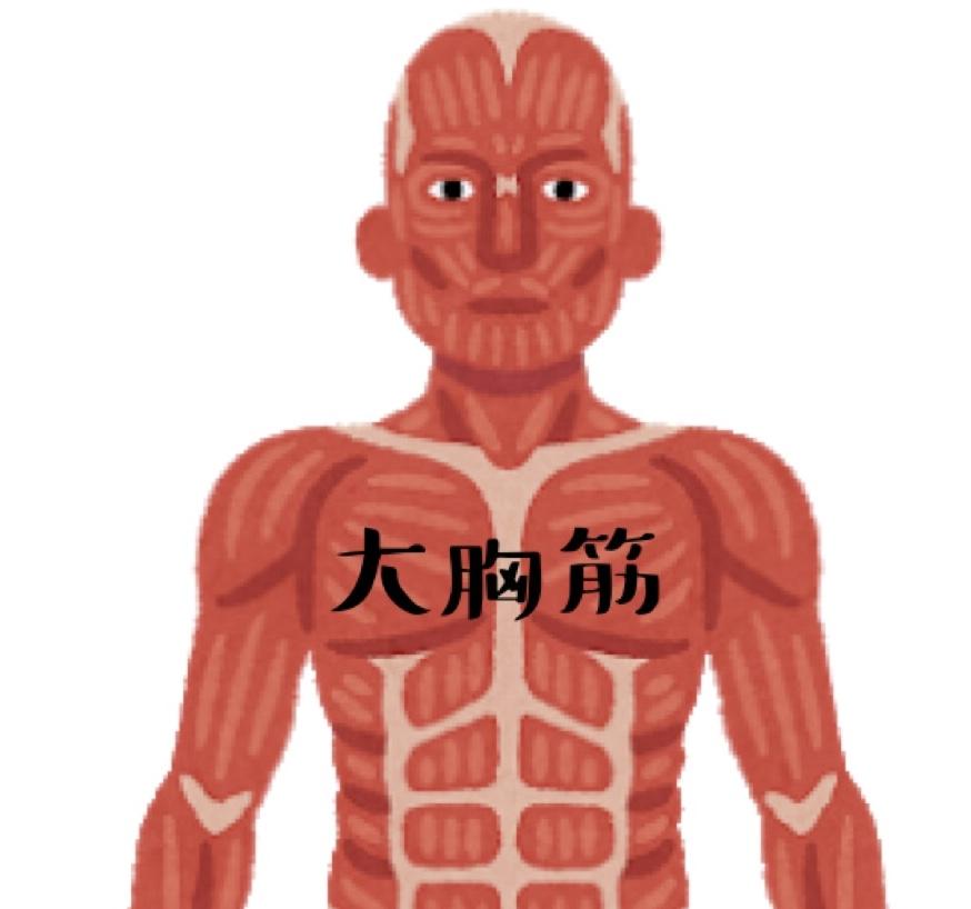 大胸筋の図