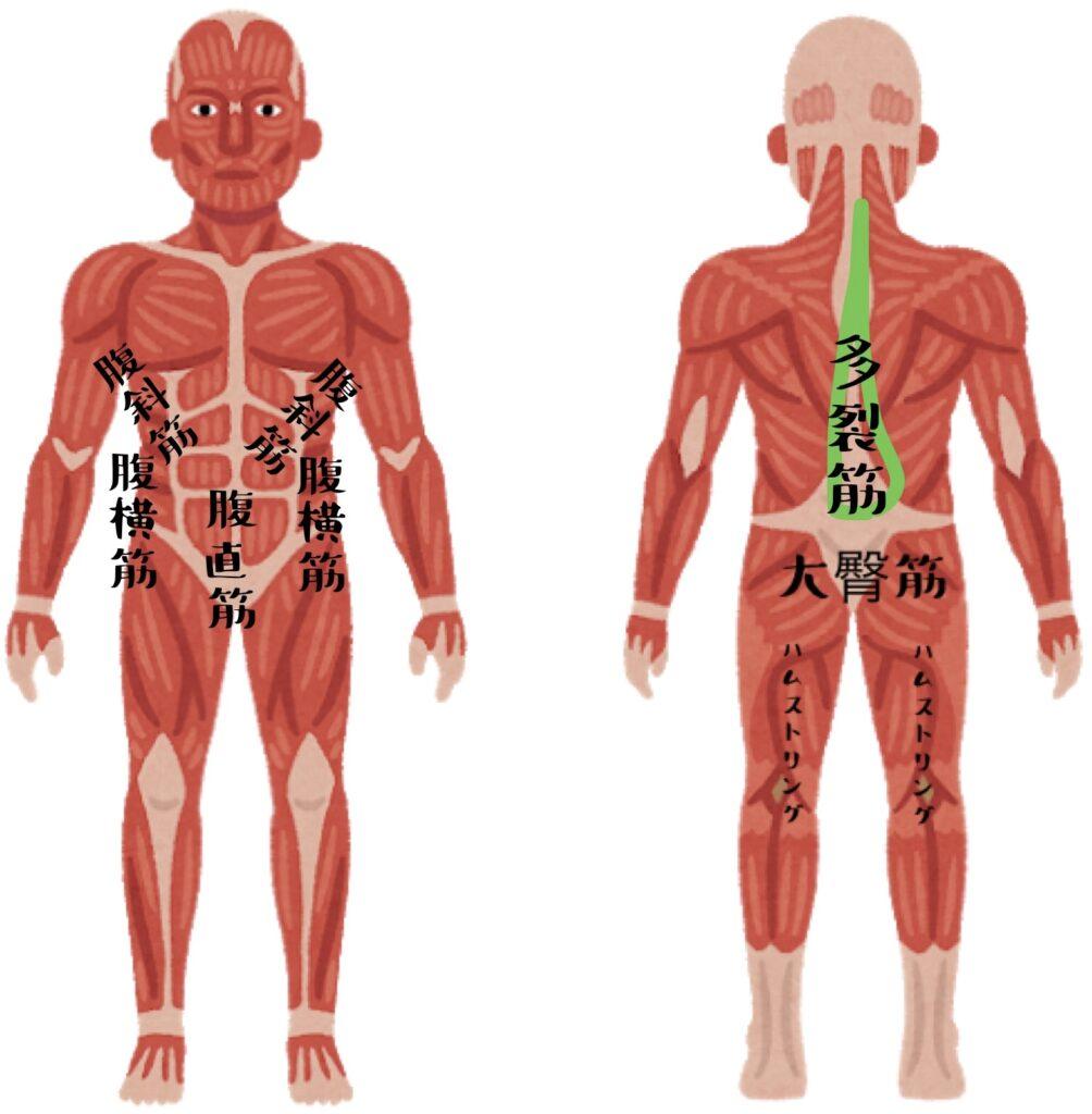 使う筋肉 腹斜筋・腹横筋・腹直筋・多裂筋・大臀筋・ハムストリング