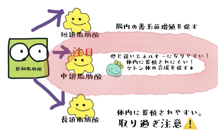 飽和脂肪酸の種類