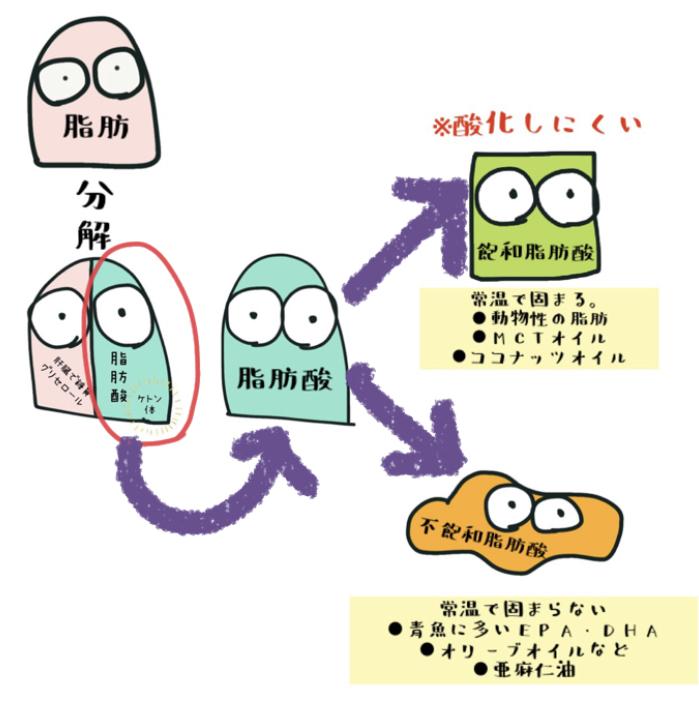 脂肪から飽和脂肪さんと不飽和脂肪酸
